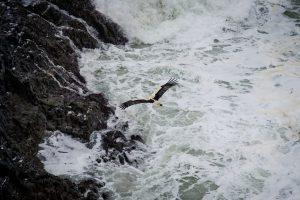 Stork Flying on Vicentine Coast