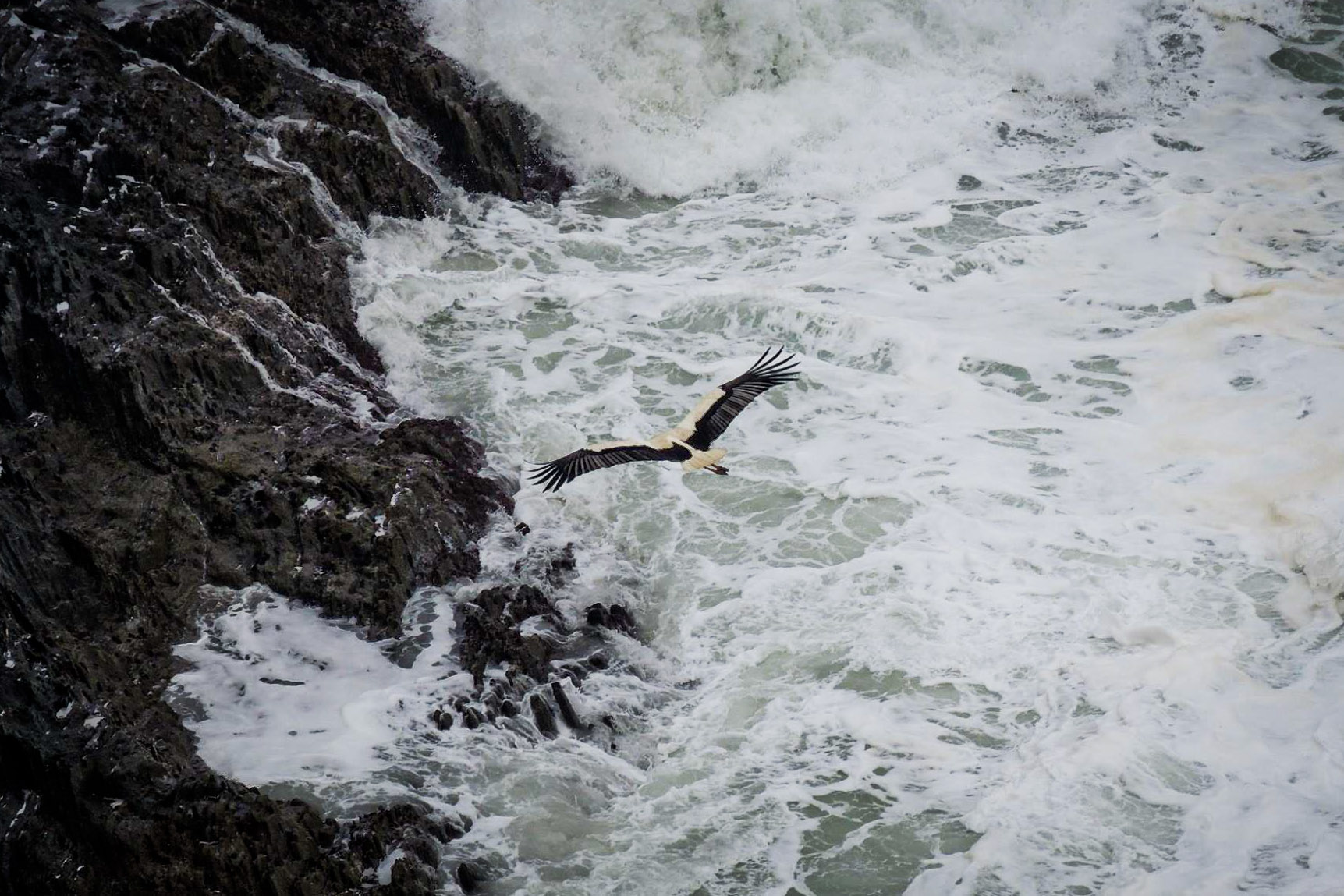 Stork Flying on Vicentine Coast